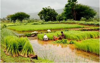 Wasser-Landwirtschaft